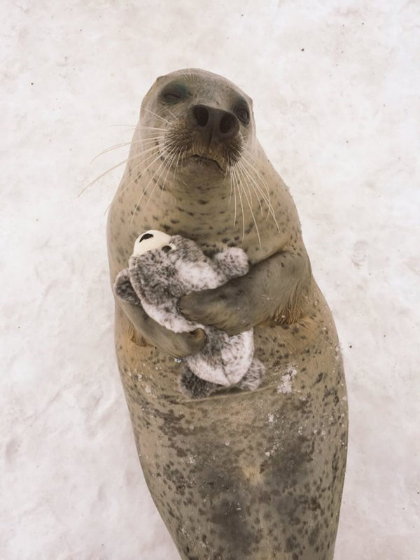 Smiley seal receives his mini self toy version and hugs it out of love and happiness